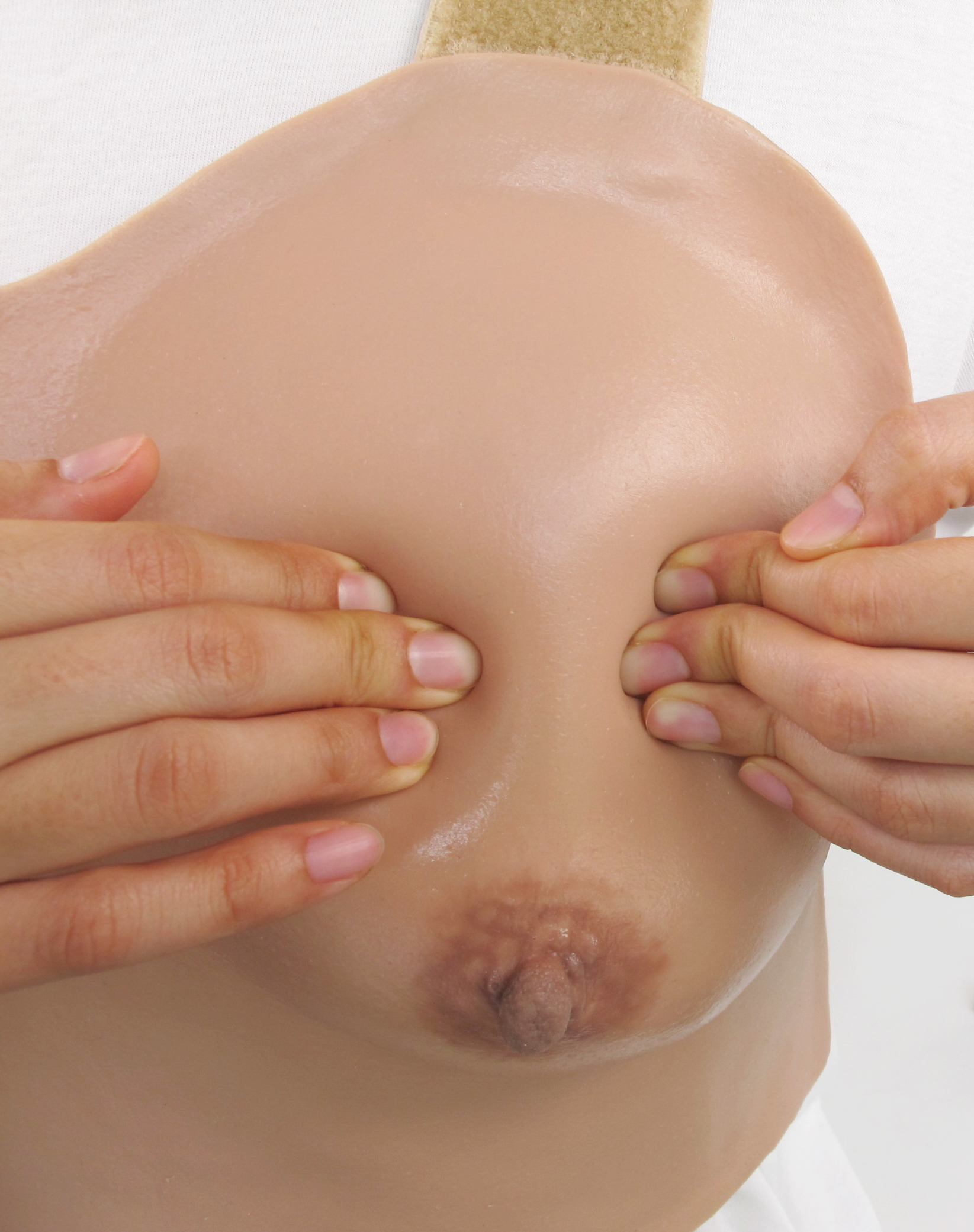 Breast Anatomy Lactation Model04