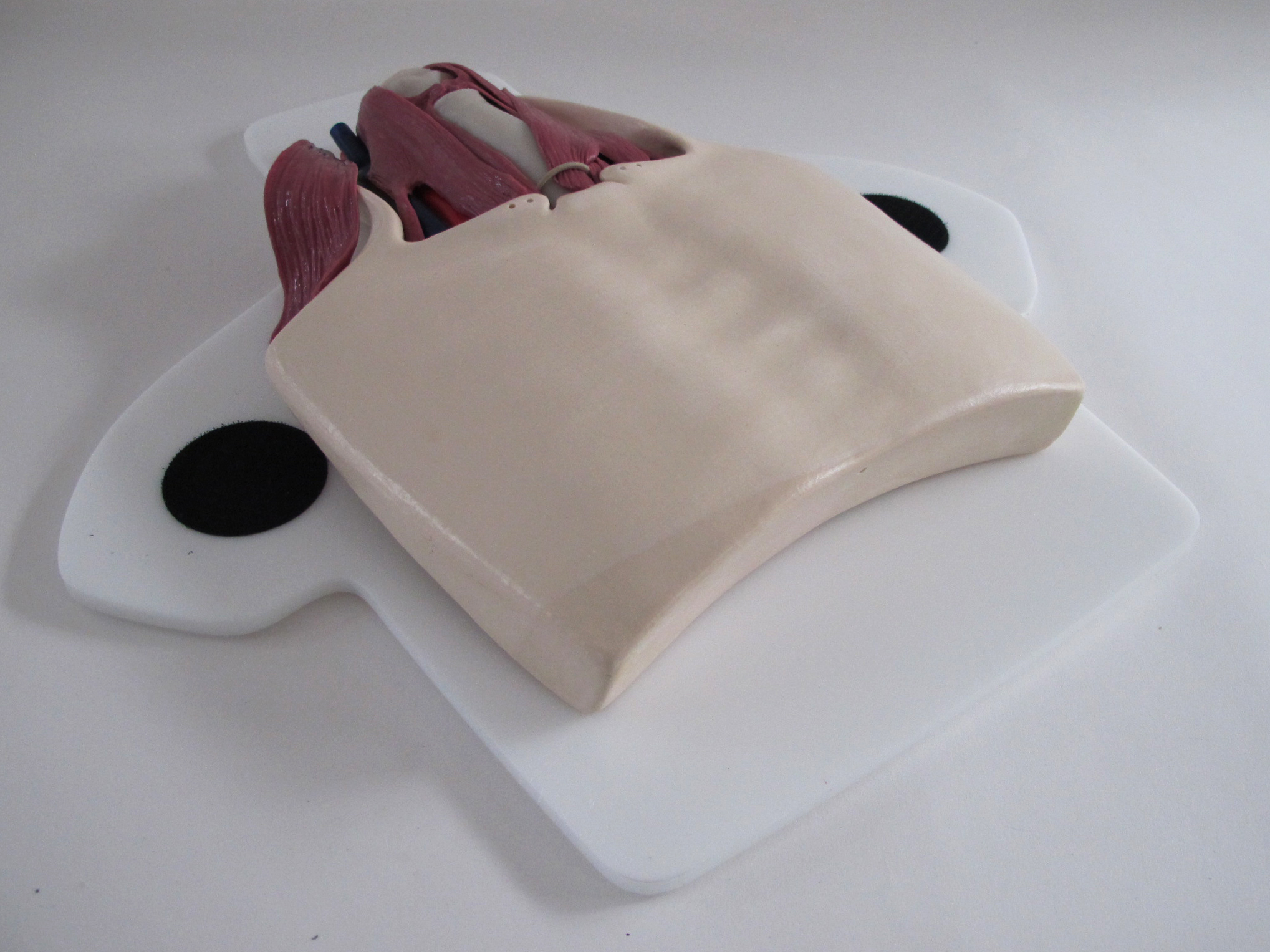 Thyroidectomy Trainer03